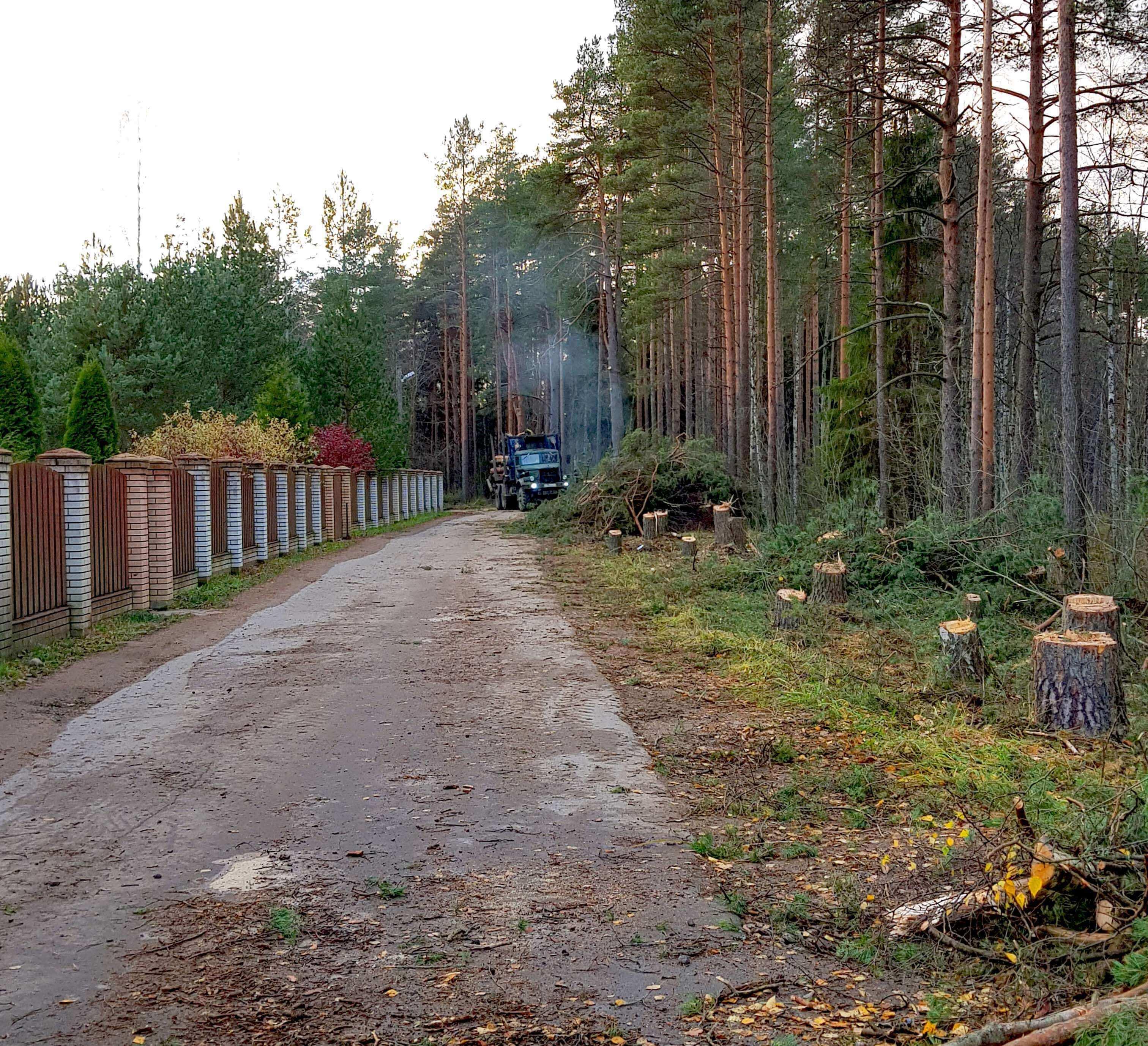 Валка деревьев для расширения дороги ПОСЛЕ